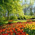LA PRIMAVERA La primavera è arrivata, finalmente è tornata Con quel sole che si sveglia la mattina con i fiori così profumati ed eleganti. La primavera è affascinante ed entusiasmante […]