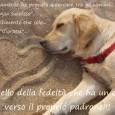 Avere un cane fa bene alla salute. Ti tira su il morale in momenti difficili, ti tranquillizza, ti fa compagnia, ti salva, ti aiuta e ti avverte se capisce che […]