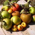Con il termine frutticolturasi intende in generale la coltivazione degli alberi da frutto. Nell'ambito delle scienze agrariela frutticoltura è una branca dell' arboricolturache si occupa degli aspetti delle caratteristiche relative […]