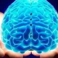 Il cervello è uno degli organi che invecchia di più, ma non tutto allo stesso modo.La corteccia cerebrale (tra le sue funzioni, presiede il ragionamento e il linguaggio), per esempio, […]