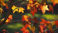 L' autunno ritorna la terra si spogli a e il ramo rimane con l' ultima foglia le rondini stanno ormai per migrare