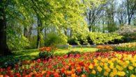 La primavera è una delle stagioni con tempo soleggiato. Inizia il 21 Marzo e finisce il 21 Giugno. Secondo la definizione meteorologica è il periodo di tre mesi tra la […]