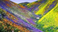 Filastrocca di primavera più lungo è il giorno, più dolce la sera. Domani forse tra lèrbetta spunterà qualche violetta: Oh prima viola fresca e nuova beato il primo che ti […]