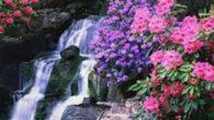è primavera il cielo è sereno senza pioggia, che bagna il terreno. Gli alberi fioriscono fioridi melo caschi dal cielo orsi,bisce e non so più. Dal letargo esci anche tu! […]