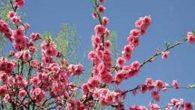 Gli animali si svegliano dal lungo sonno e tutto fiorisce intorno. I fiori si stiracchiano pian piano e il prato gli da una mano. Il sole tanto amico tinge l' […]