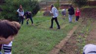Questa mattinata e' stata davvero molto divertente: siamo andati nell'orto della scuola, il nostro orto. Era pieno di erbacce e, la Professoressa Fausti di matematica e scienze, ci ha detto […]