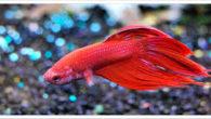Il pesce C'è un pesciolino laggiù, lì in fondo al mare blu. Un bambino prende il retino e cattura il pesciolino. L'animale è infastidito e il bambino sbalordito. Il pesce […]