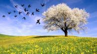 La primavera Primavera bentornata, finalmente sei arrivata! Così felice e spensierata bella e colorata! Con i tuoi bellissimi fiori fai sbocciare tanti amori! Con la tua allegria porti gioia e […]