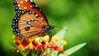 Le farfallesono insetti molto conosciuti in tutto il mondo . Sappiamo molte cose perché i biologi le hanno studiate per anni , per questo ora sappiamo dire che la farfallaprima […]