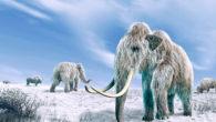 Poco tempo fa, grazie ad alcune ricerche, si è venuto a sapere che oltre 5.000 anni fa, nelle zone dell'Alaska e del Kamchatka si estinsero gli ultimi mammut. Povere bestie! […]