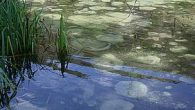 Con i miei compagni di classe sono andato in gita alle sorgenti del Pescara. Le sorgenti si trovano in una riserva naturale dell'Abruzzo: c'era uno specchio d'acqua, c'erano gli alberi, […]