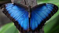 Una delle specie più numerose del pianeta è la famiglia degli insetti. Il loro corpo si divide in capo, torace e addome. Sul capo si trovano due antenne, gli occhi, […]