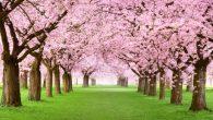La primavera sta arrivando e tutti lastanno aspettando. Una stagione così brillante  non può che essere affascinante. L'erba è fresca il sole splende come non mai questa è la […]