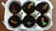 Lunedì 4 marzo, insieme alla professoressa Pompili, la 2 H ha realizzato un semenzaio. Ognuno di noi ha portato una bustina di semi (a piacere) , una scatola di uova […]