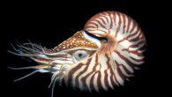 I molluschi sono invertebrati e sono dotati di una simmetria bilaterale (il loro corpo si può dividere in parti uguali. Si dividono in: gasteropodi, come la lumaca, bivalvi come le […]