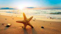 L'estate è la stagione più bella di tutte Con cose molto asciutte. D'estate c'è molto divertimento E si può fare anche tanto allenamento. Con il sole e il mare Ci […]