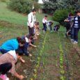 Mercoledì 22 ottobre la professoressa Fausti ci ha portato all'orto per togliere le erbacce. Quando siamo arrivati ho notato che alcune piante erano state mangiate da bruchi e lumache,il terreno […]