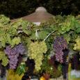 La sagra dell'uva si festeggia ogni anno in autunno e precisamente a settembre. In questa sagra si trovano vari stand con vini provenienti da tutto il mondo e che possono […]
